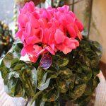 花鉢・寄せ植え